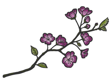 A branch of cherry blossoms. Sketch scratch board imitation color. Engraving raster illustration 免版税图像