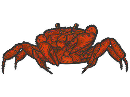 Red rthropoda crab. Sketch scratch board imitation color. 矢量图像