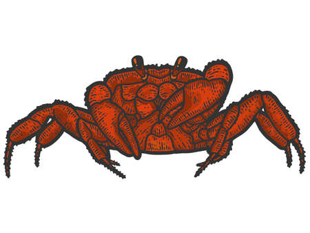 Red rthropoda crab. Sketch scratch board imitation color. 免版税图像