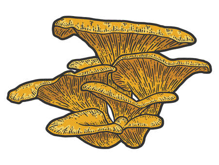 Mushroom plants. Sketch scratch board imitation color.