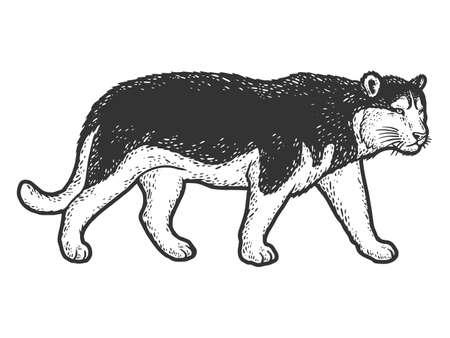 Tiger coat color like dog of the Husky breed. Sketch scratch board imitation. Vecteurs