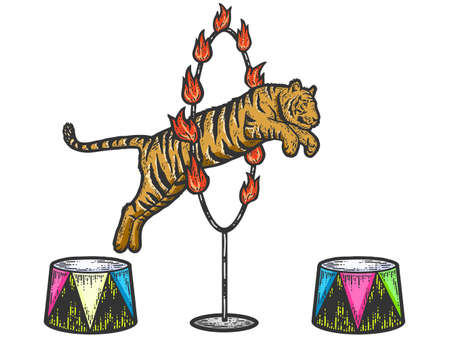 Circus, tiger jumping through a ring of fire. Sketch scratch board imitation color.