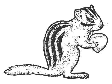 Rodent, chipmunk with hazelnut. Sketch scratch board imitation coloring.