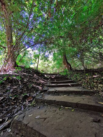 keep moving toward, walk on the stairs into jungle, Thailand Stock Photo