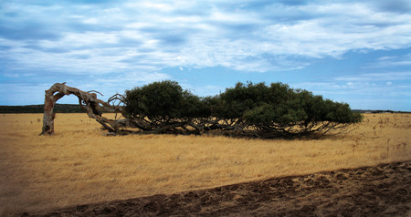 wind blown: Strength through Perserverance Stock Photo