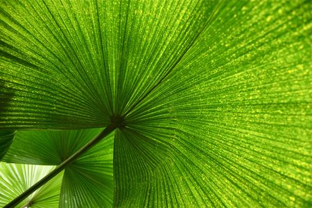 Three Palm Leaves in Formation Stock Photo - 5595380
