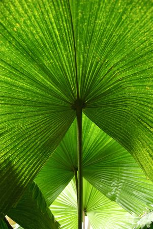 Three Palm Leaves in Formation Portrait Stock Photo - 5595381