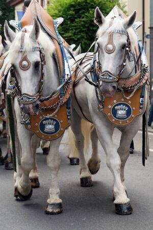 wedding horses  Stock Photo
