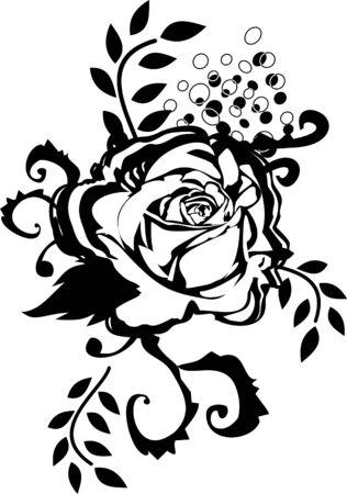 black rose  Vector