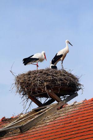 storks-nest photo