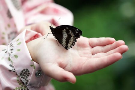 hand butterfly: butterfly
