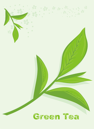 mint leaves: Green tea Illustration