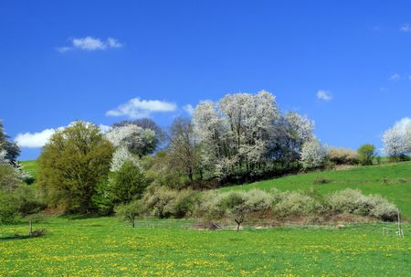spring landscape  Stock Photo - 4719266