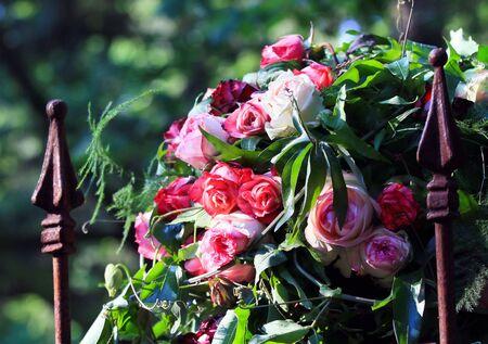 roses garden photo