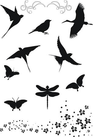 veréb: design elements  Illusztráció