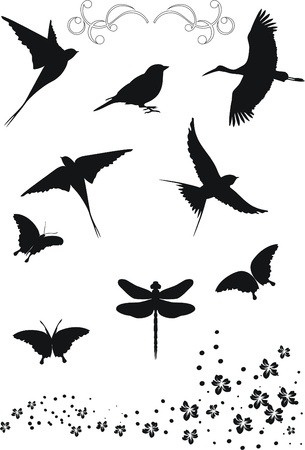 sparrows: design elements  Illustration