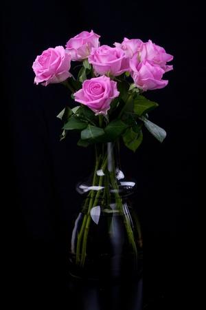 rosas negras: Pink rosas