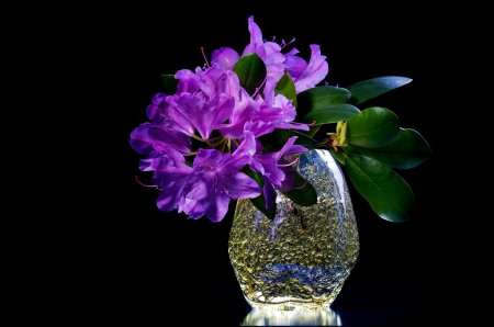 cut flowers: Purple azalea blossoms in  vase against black background Stock Photo