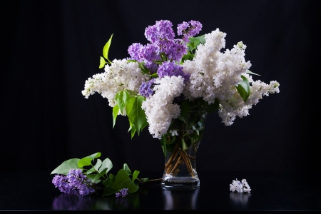 Still life of purple and white lilac in glass vase Stock Photo