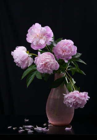 Still life with beautiful pink peonies photo