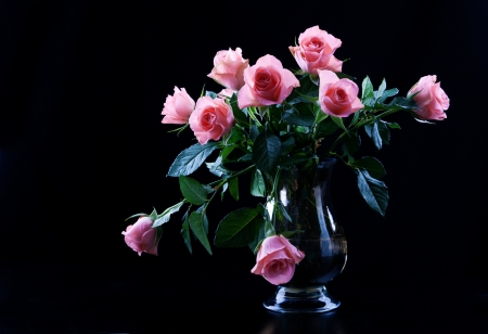 Close up of beautiful pink roses photo