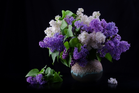 vase color: Still life of purple and white lilac in vase