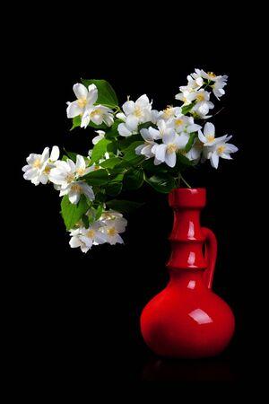 Jasmine bouquet in the vase on black background photo