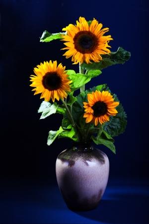 Still life with sunflowers on dark blue background