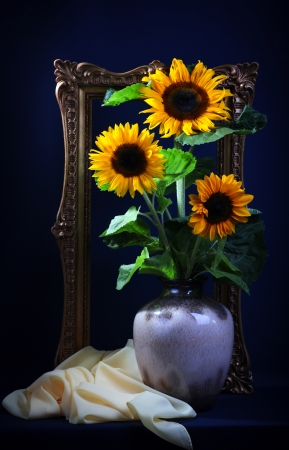 Still life with sunflowers  on dark blue background Stock Photo