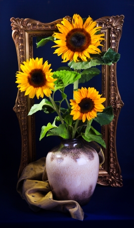 Still life with sunflowers  on dark blue background photo
