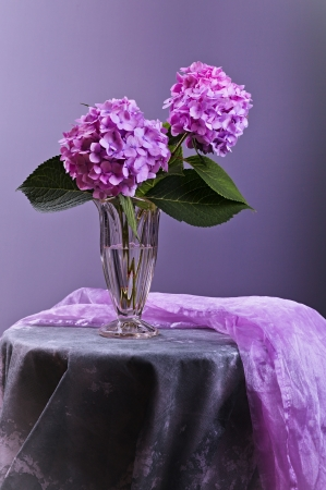 Still-Life with purple Hortensia flowers in glass vase