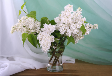 Still life with white lilac in vase