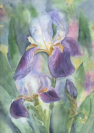 Dessinés à la main illustration d'aquarelle d'iris