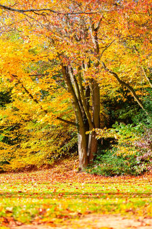 autumn landscape: Autumn landscape with colorful  trees and leaves Stock Photo
