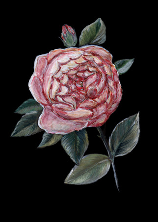 english rose: Original art, oil painting of an English rose from the rose breeder David Austin