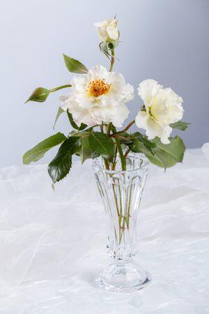 glass vase: Beautiful white roses in glass vase