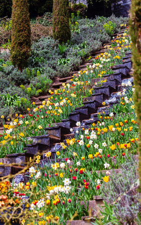 Flower garden and a staircase with waterfall on the island Mainau, Germany
