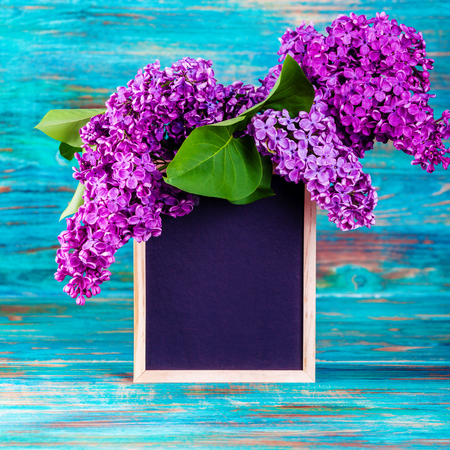 Lilac flowers on turquoise background