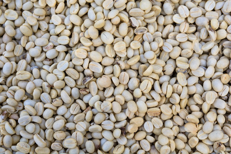 unroasted: drying raw, unroasted coffee beans.
