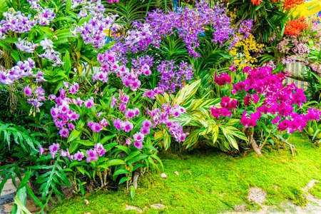 Home flower garden, small flowers garden at house backyard for nature atmosphere. Archivio Fotografico