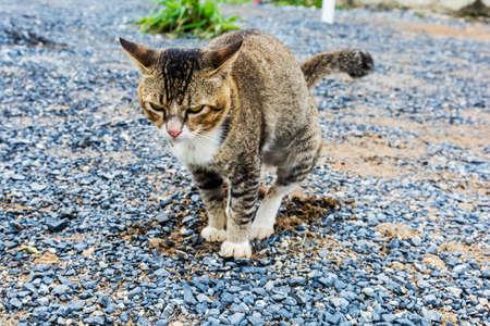 Domestic cat pooping on gravel floor.
