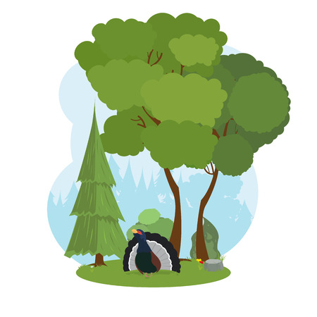 grouse: capercaillie in the forest. Forest grouse. vector.
