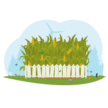 white fence: corn field behind a white fence. corn farm. vector.