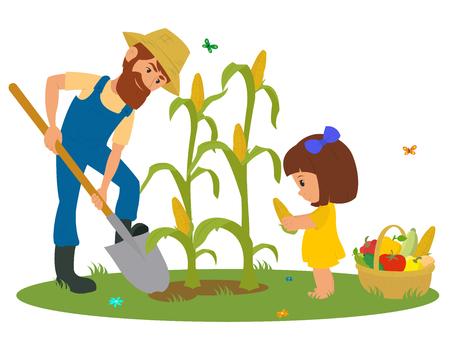 Mann und kleines Mädchen Ernten von Mais. Vater und Tochter Mais geerntet. Vektor Standard-Bild - 62620449