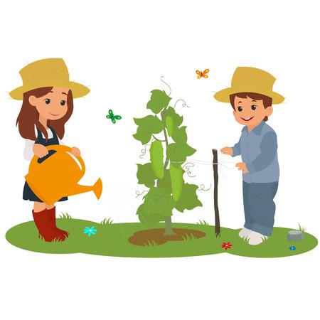 chico y chica regando el pepino. los niños regar las plantas. Hijos en el campo para el cuidado de las plantas. vector