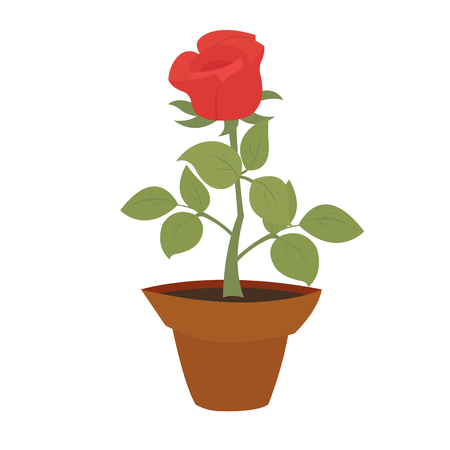 indoor bud: Watercolor potted red rose flower with green leaves in flower pot closeup isolated on white background. Hand painting on paper Illustration
