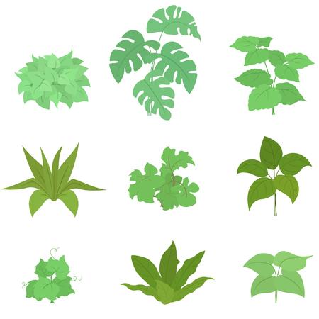 Set of house plant isolated vector flat illustration. Ilustração