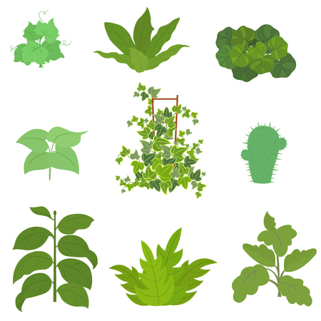 Set of house plant isolated. vector illustration.