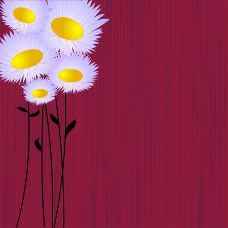 daisy vector: Daisies