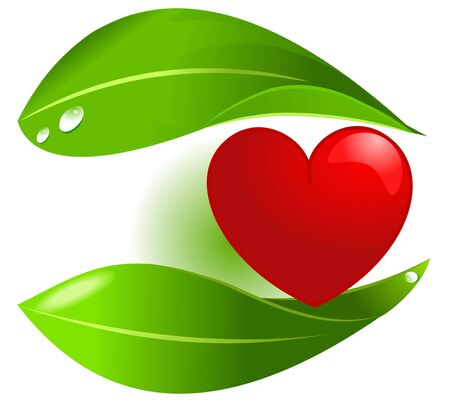 vegetal: Vegetal food protecting heart